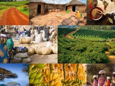 Tarımsal Emtia İşlemleri Nasıl ve Nerede Yapılır?